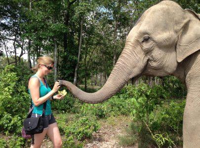 Kambodscha_Elefanten
