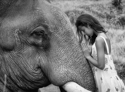 Kambodscha_Elephant