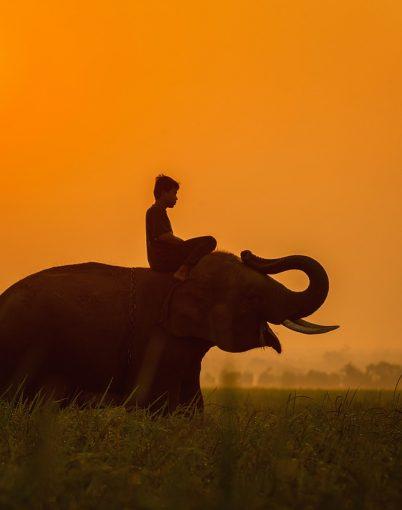 Kambodscha_Elefant